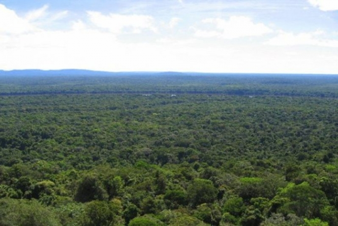 Guyana, Suriname mull profiting from intact rainforests together